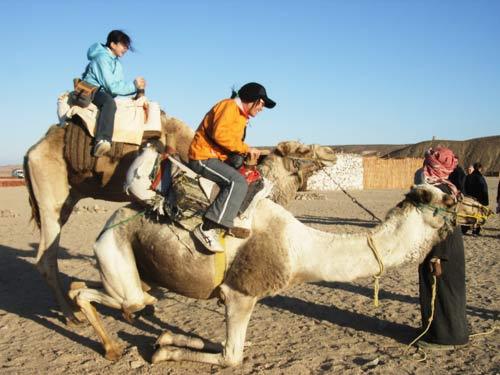 蹲着骆驼简笔画